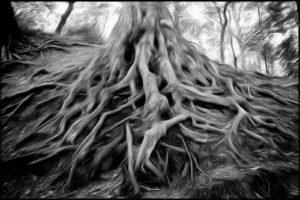 roots-background-illustration